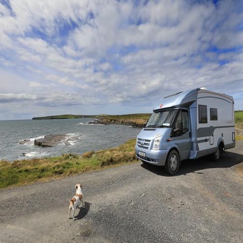 Dog camping caravan holiday