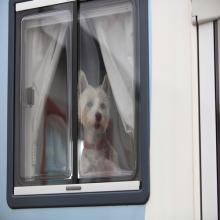 Motorhome Dog
